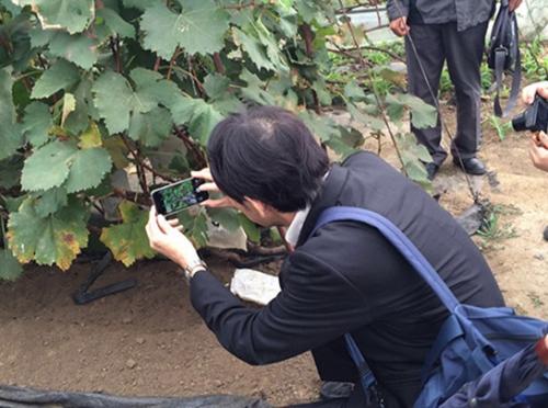 日本专家考察农场